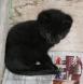 Katzenbaby 4 Wochen
