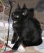 Katzenbaby droht (6 Wochen)
